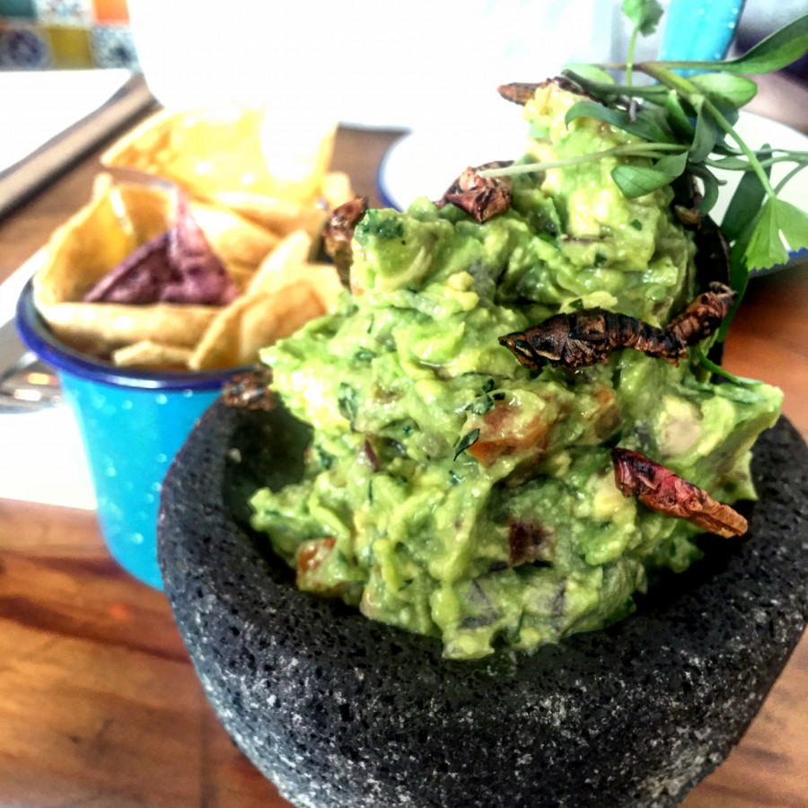 Santo Remedio guacamole with grasshoppers